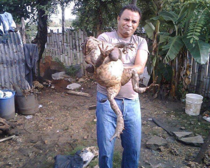 Царевна - лягушка из Никарагуа