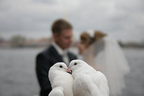 Любовь и голуби: поцелуй