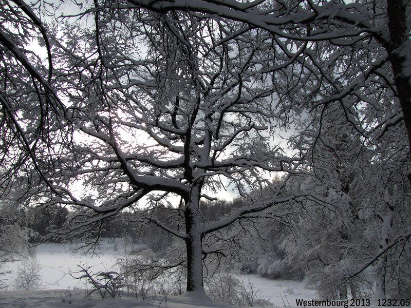 1232.05 Зимний дуб
