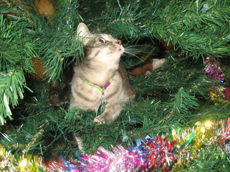 Коты на ёлке - фото 27