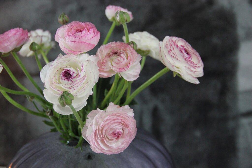 фото цветов лютики в высоком качестве пролив