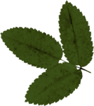 jsn_round4_mopb_leaves.png