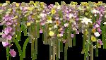 Lug_Grass_Flower (18).png