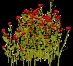 Lug_Grass_Flower (33).png
