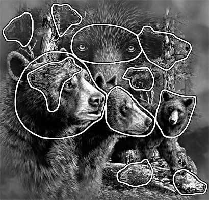 11 черных медведей