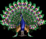 61788605_BirdPeacockWTCreatedByVictoriaPSPsm.png
