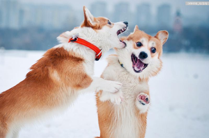 пофотографирую Ваших собак! - Страница 5 0_1446c7_fdb96f0_orig