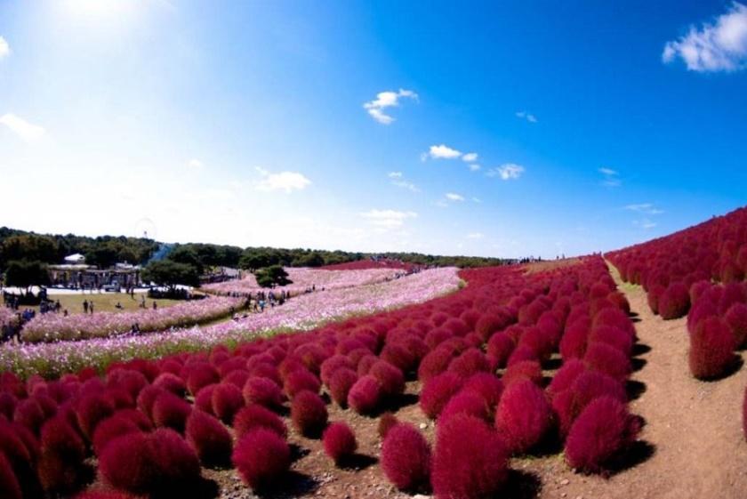 Живописный японский парк Хитати Кайхин 0 1422d5 c8009ed8 orig