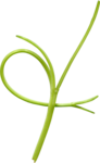 ldw_scc_el-branch-green2.png