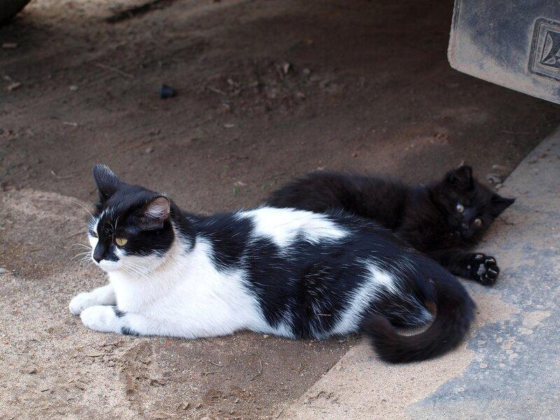 Кошки и котята спасателей P4281380.jpg
