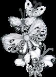 s_JBromley-Butterflies.png