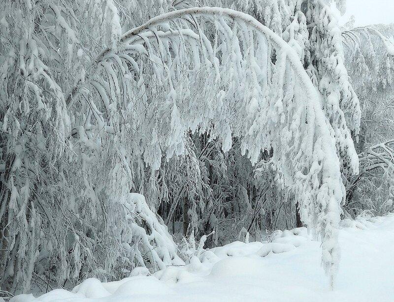 Зимний веер
