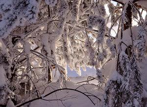 Зима, прелестна ты, не скрою. Как бесподобна твоя чистая краса!