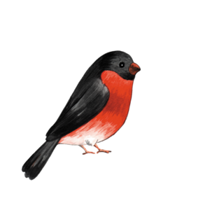 Клипарт на тему птицы нашего края