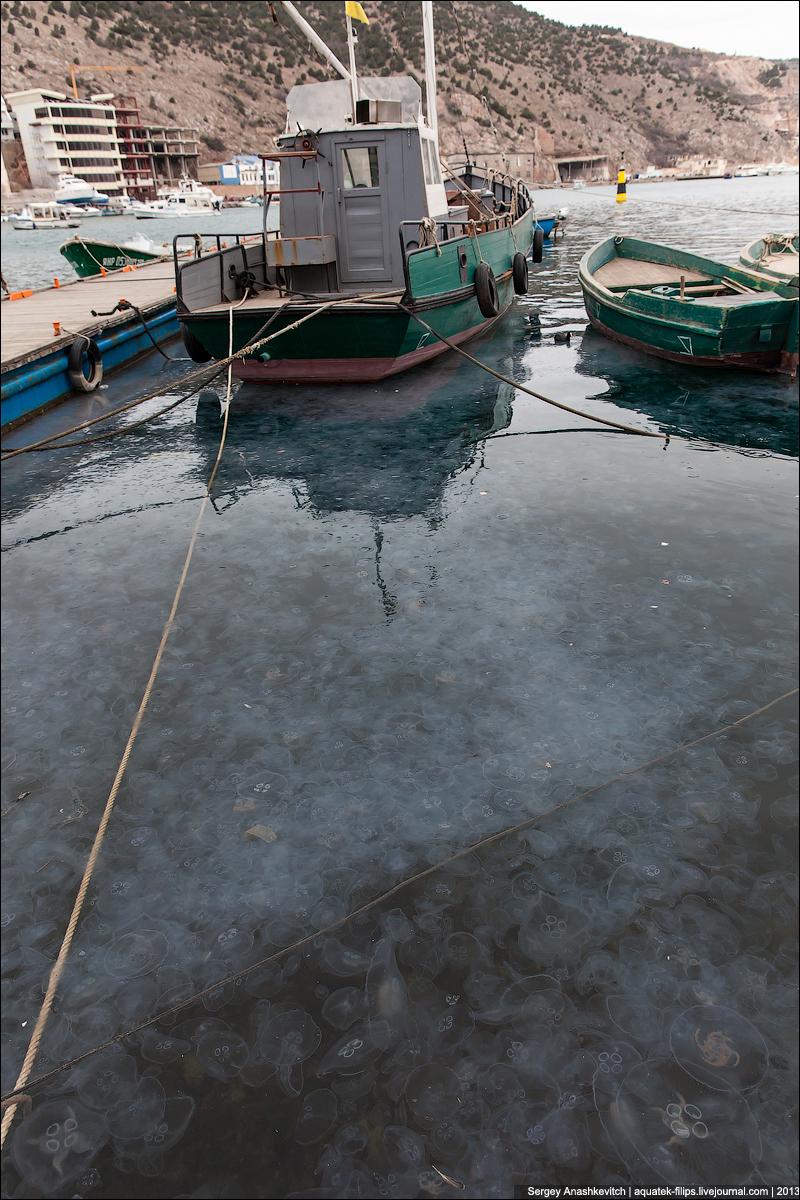 Нашествие медуз в Балаклаве