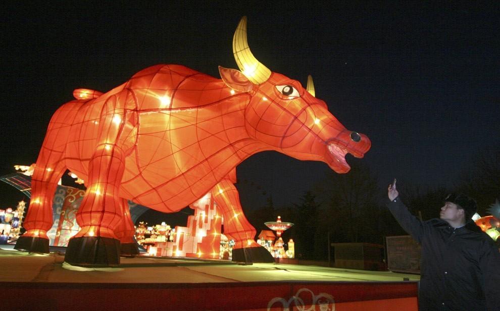 Посетитель использует мобильный телефон, чтобы сфотографировать гигантский фонарь в форме быка