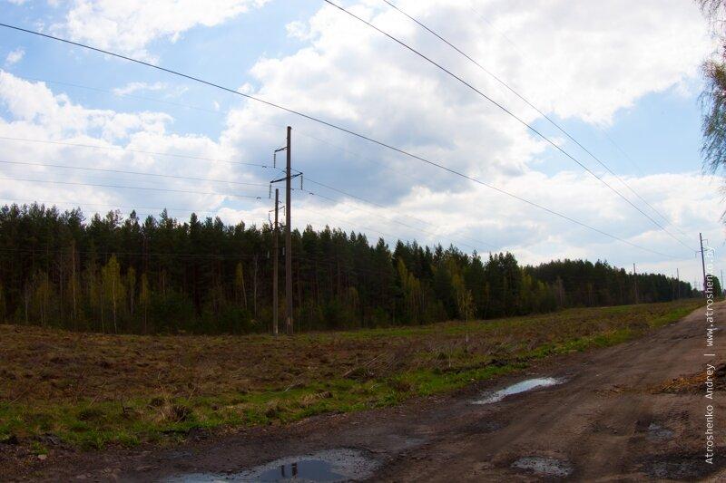 вырубка леса в военной академии