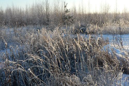 зимняя прогулка всё в инее