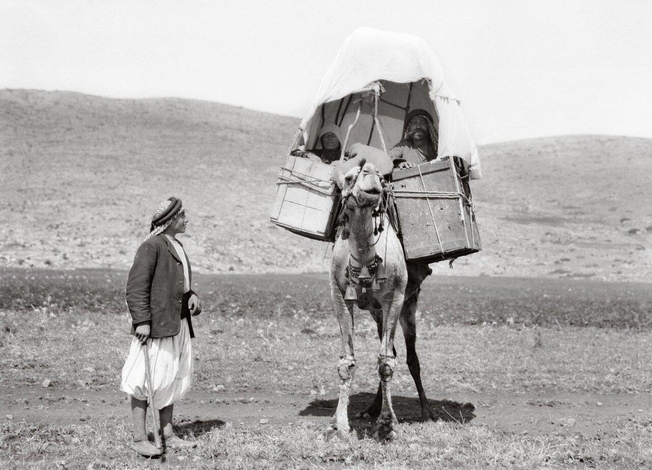 Аборигены путешествуют на верблюдах. Иордания 1900-1920 гг.