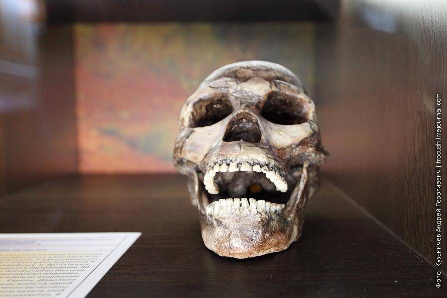 Котельничский палеонтологический музей