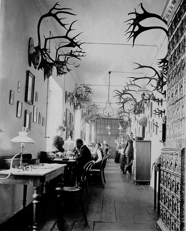 Department of Biology at the Faculty of Medicine of the University of Lviv, 1911-14.