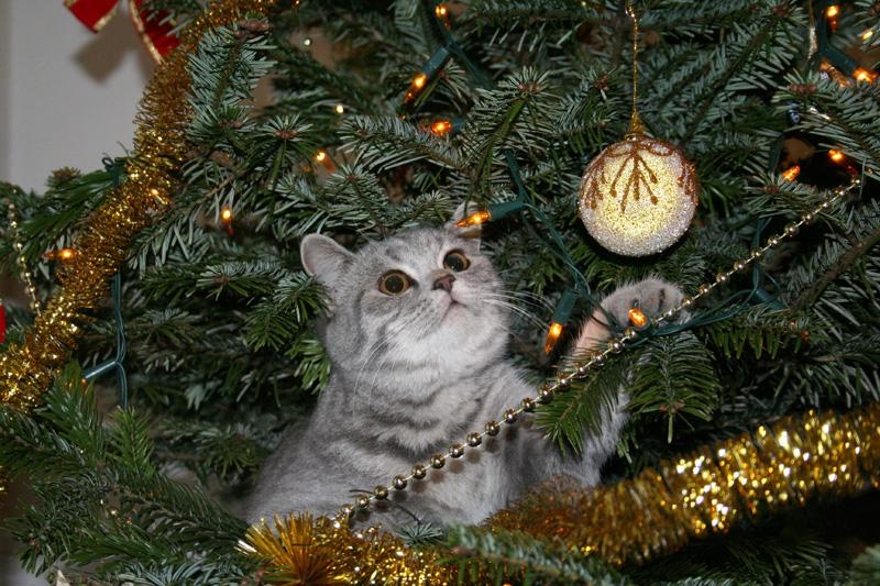 Коты на ёлке - фото 15