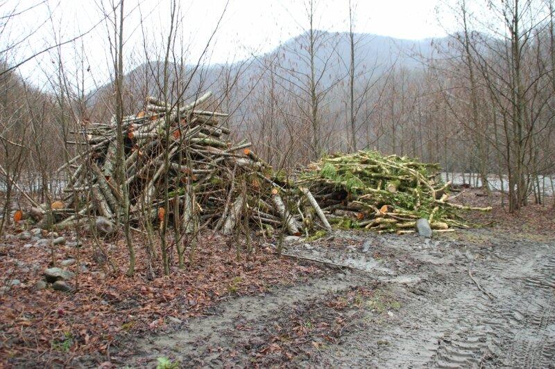 вырубка заповедного леса для дороги Путина к Лунной Поляне