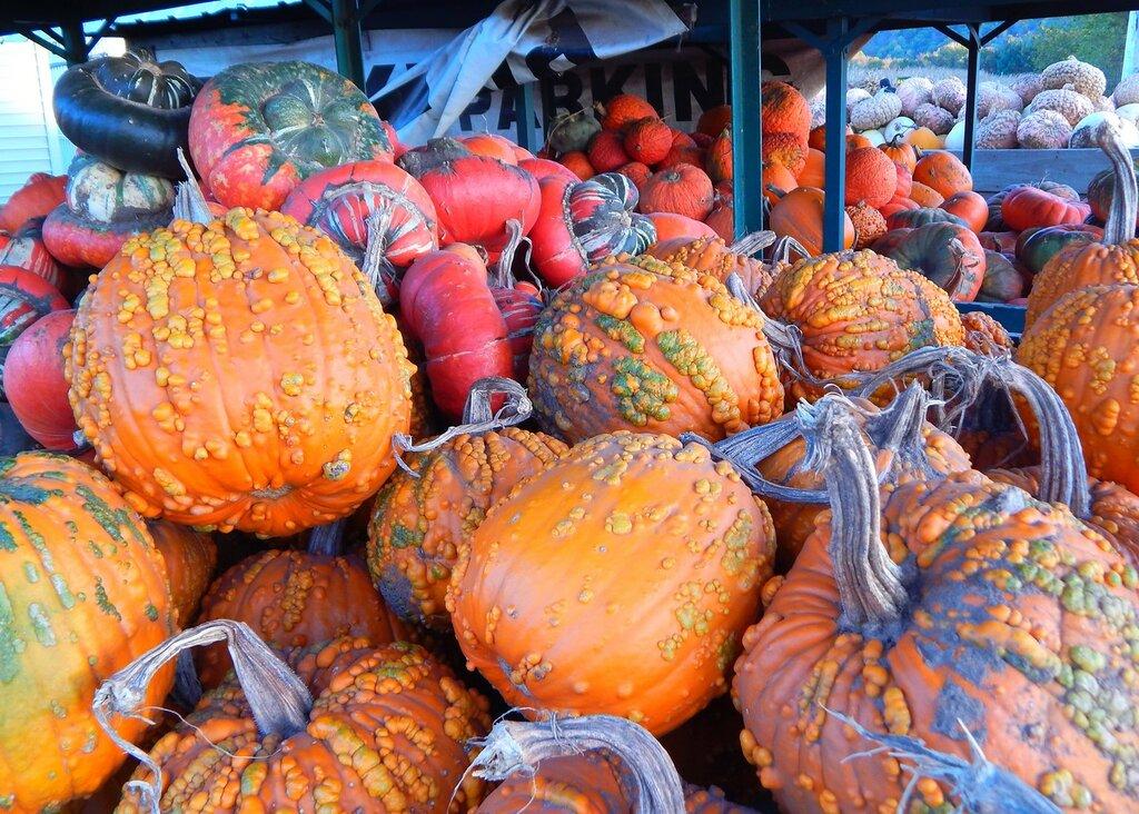 Farmers market.