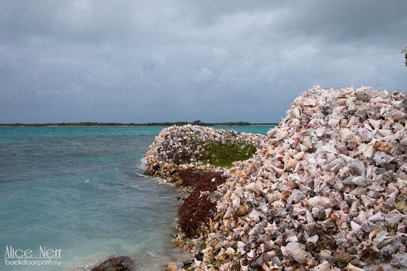 кладбище ракушек на острове Crasqui, los roques