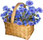 AD_Honey_Day (21).png
