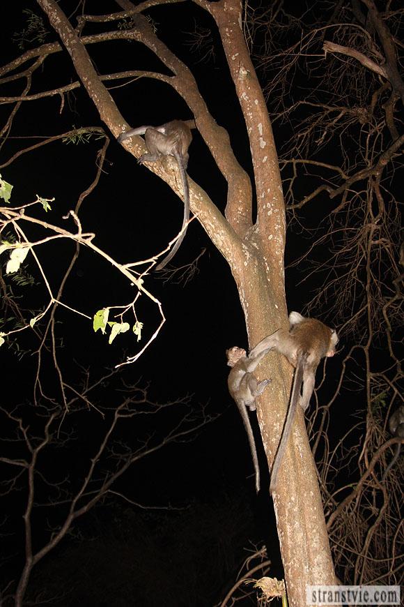 Обезьяна мама с обезьяном сыном