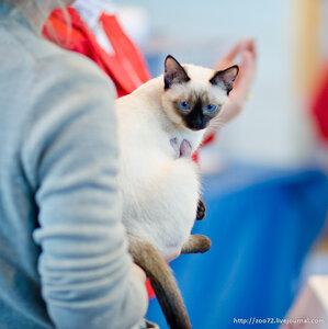 Выставка кошек Felina Belissima - 5