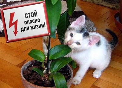 опасно для кошек