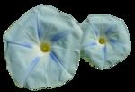 Fleur Bleu par PubliKado.0710.CU (1).png