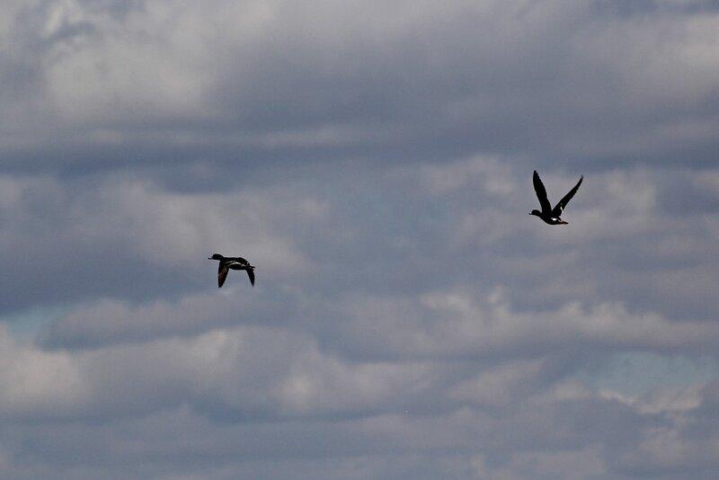 Летят две утки