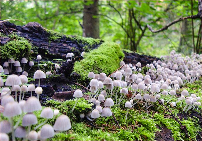 Букет грибов на 8 марта)