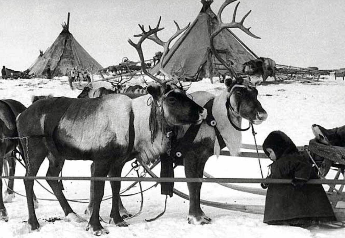 1968. Канинская тундра, Ненецкий округ,