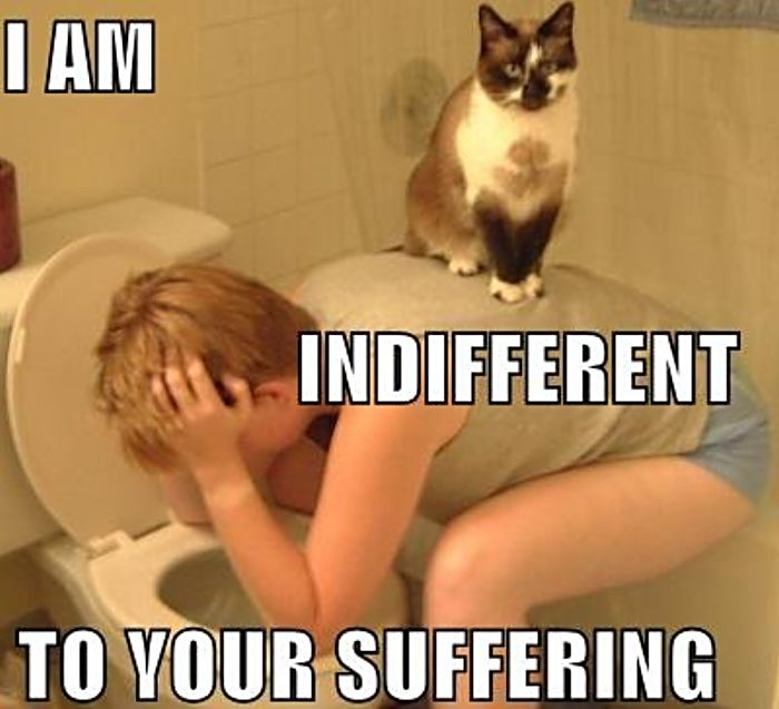 Copy of cat indifference.jpeg
