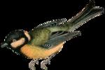 nb_vp_bird4.png