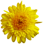 feli_gs_flower3.png