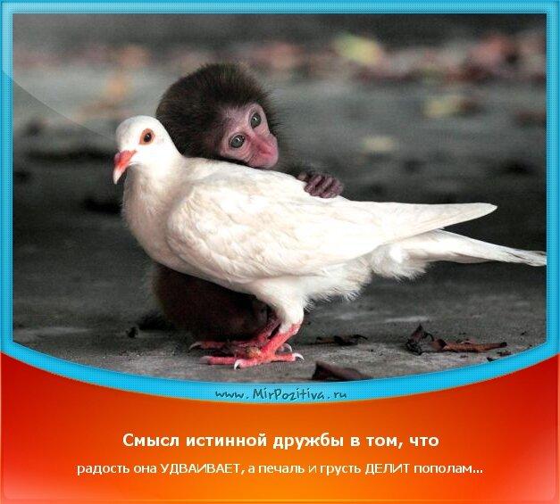 Позитивчики недели: Смысл истинной дружбы в том, что радость она УДВАИВАЕТ, а печаль и грусть ДЕЛИТ пополам...