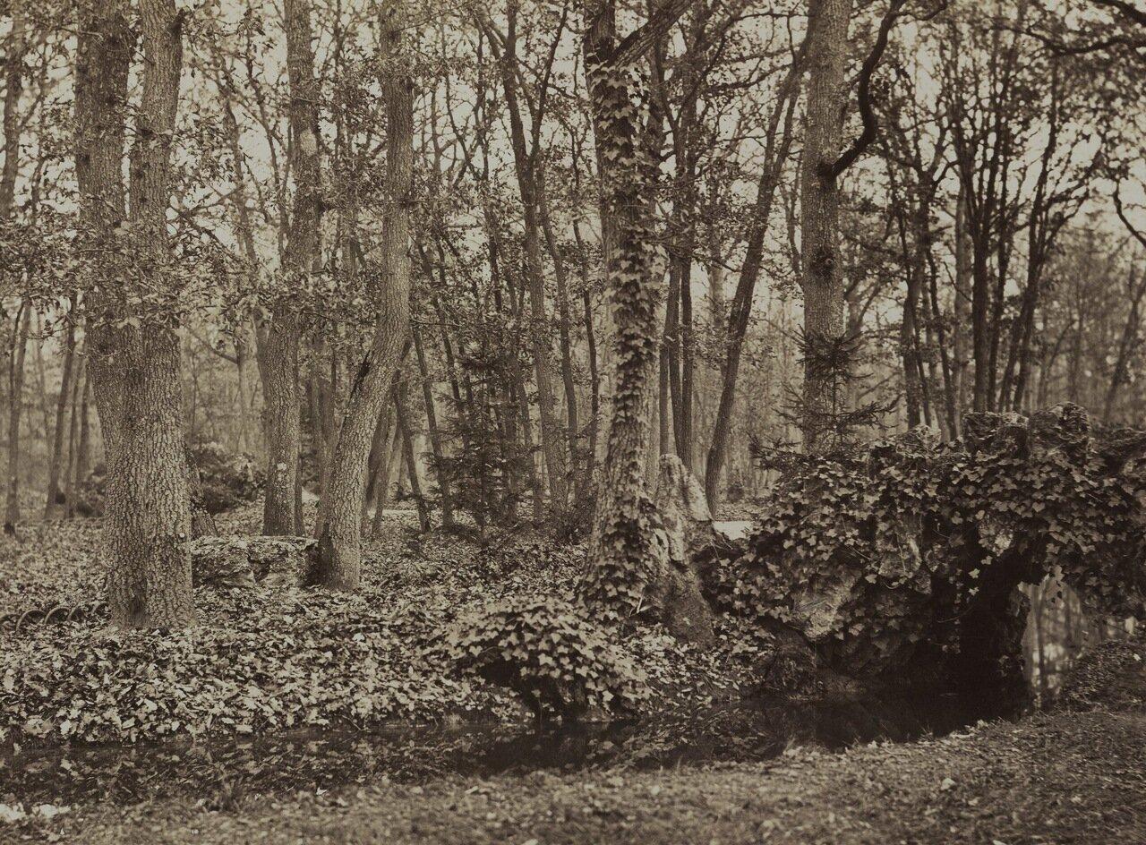 Шлюхи булонского леса 20 фотография