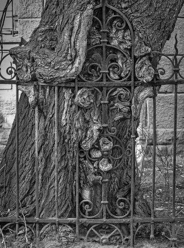 Дерево и железо.