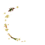 Lily_leaf_el (2).png