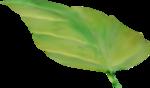 NLD Leaf (4).png