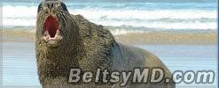 В Бразилии трёхметровый морской лев гулял по улицам