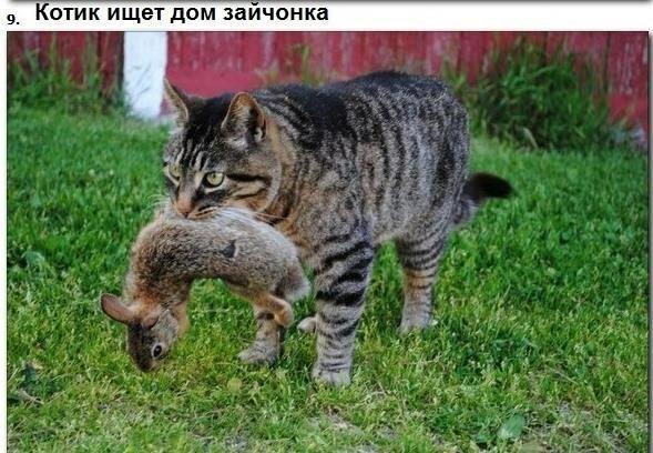 Трогательное фото животного мира