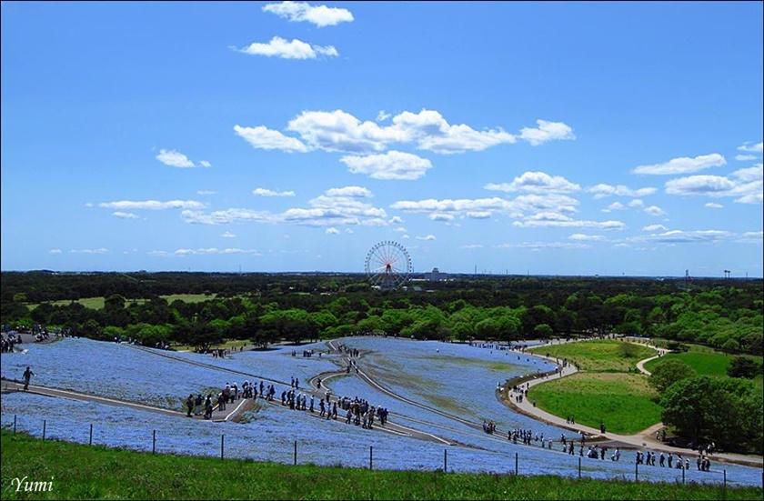 Живописный японский парк Хитати Кайхин 0 1422bb cfa8b432 orig