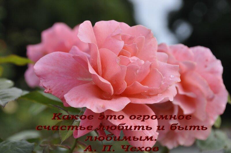 http://img-fotki.yandex.ru/get/5646/25708572.80/0_91da7_41d76340_XL.jpg