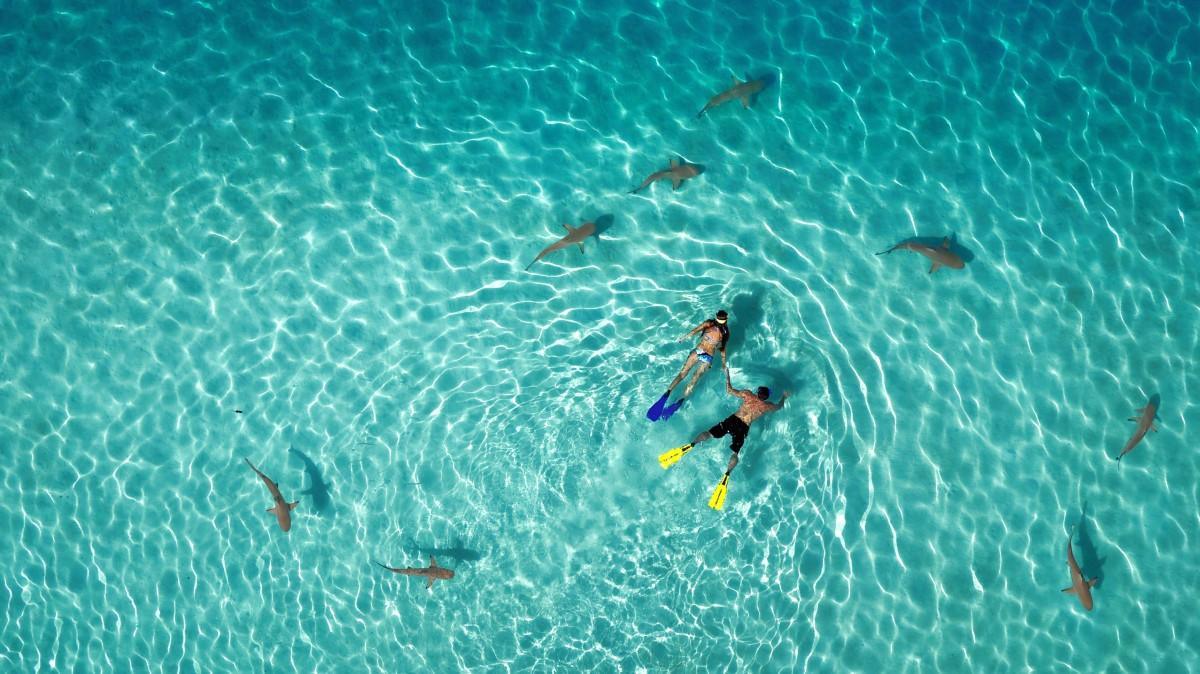 Первое место в категории «Природа»: «Плавание с акулами», автор Tahitiflyshoot
